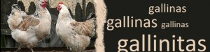 cropped-gallina1.jpg